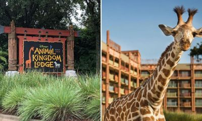14-wildly-interesting-facts-about-disney8217s-animal-kingdom-lodge