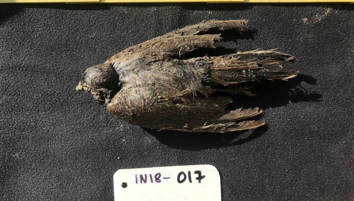 Consider it or not, this completely preserved chicken is definitely 46,000 years outdated - BingePost